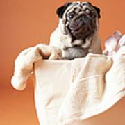 Dog In Basket Art Print