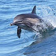 Dolphin Riding Wake Art Print