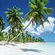 Dominican Republic, Saona Island, Palm Art Print