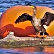 Double Crested Cormorant    Drying Wings         September        Indiana Art Print