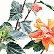 Double Orange Hibiscus With Buds Art Print