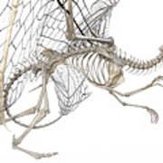 Dragon Skeleton  Art Print