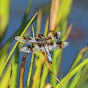 Dragonfly Perched By Pond Art Print
