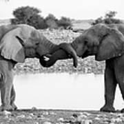 Elephants Curling Trunk Art Print