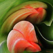 Emerging Tulips Art Print