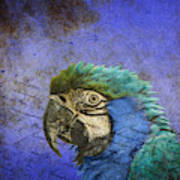 Blue Exotic Parrot- Pirates Of The Caribbean Art Print