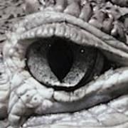 Eye Of Alligator Art Print