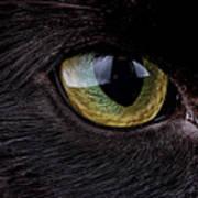 Eye Of Black Cat, Felis Silvestris Catus Art Print