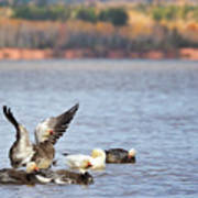 Fall Migration At Whittlesey Creek Art Print