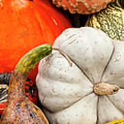Fall Season Squash And Pumpkins Art Print
