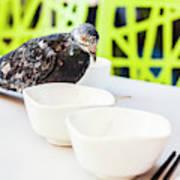 Fast Food Asian Pigeon Art Print