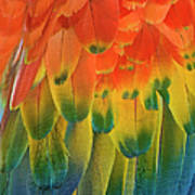 Feather Pattern, Scarlet Macaw Art Print