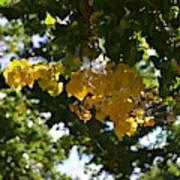 First Golden Leaves Art Print