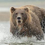 Fish Coastal Brown Bear Of Alaska Art Print