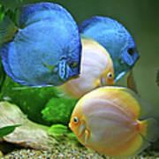Fish In Water Art Print