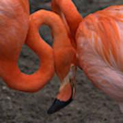 Flamingo Couple Art Print