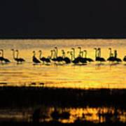 Flamingos At Dawn Art Print