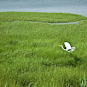 Salt Marsh Flight Art Print