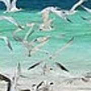 Flock Of Seagulls By Azure Beach Art Print
