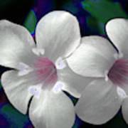 Floral Photo A030119 Art Print