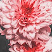 Flower Buds Art Print