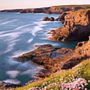 Flowering Sea Thrift Armeria Maritima Art Print
