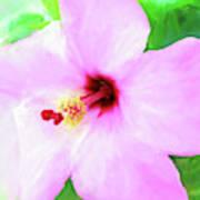 Flowers Of Florida I Art Print