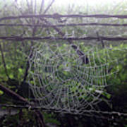 Foggy Web Art Print