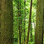 Footpath Between The Trees Art Print