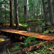 Forest Foot Bridge Art Print
