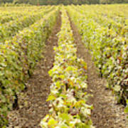 French Vineyards Of The Champagne Region Art Print