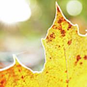 Frost On Autumn Leaf, Detail Art Print