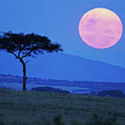 Full Moon Rising Above Tree, Savanna Art Print