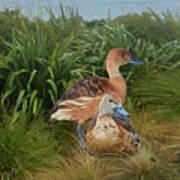 Fulvous Whistling Ducks  Art Print