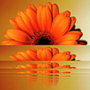 Gerbera Flower As Rising Sun Art Print