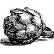 Globe Artichoke   Antique Culinary Art Print