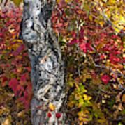 Gnarled Tree Trunk - Dezadeash Lake - Yukon Territory  Art Print