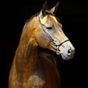 Golden Horse Art Print