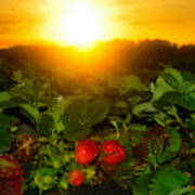 Good Morning Strawberries Art Print