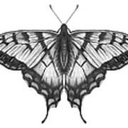Graphite Illustration Of A Beautiful Art Print