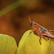 Grasshopper 4600 Art Print