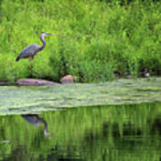 Great Blue Heron Square Art Print