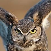 Great-horned Owl Bubo Virginianus Art Print