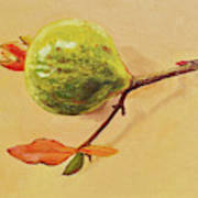 Green Pomegranate Art Print