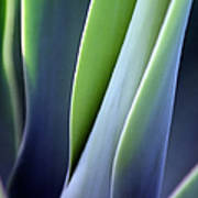 Green Smooth Leaves Art Print