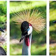 Grey Crowned Crane Gulf Shores Al Collage 2 Triptych Art Print