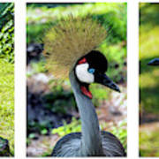Grey Crowned Crane Gulf Shores Al Collage 6 Triptych Art Print