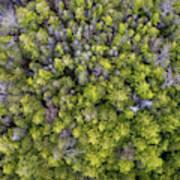 Grove Of Pines Aerial Art Print