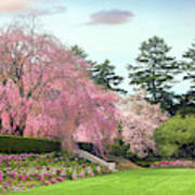 Weeping Cherry And Tulips Art Print