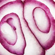 Half Red Onion Macro Art Print